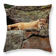 Mountain Lion Puma Concolor Lounging Throw Pillow by Gerry Ellis