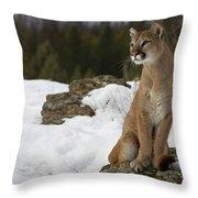 Mountain Lion Puma Concolor Sitting Throw Pillow