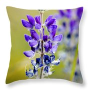 Mountain Lupine Glacier National Park Throw Pillow
