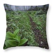 Mountains To Sea Trail Throw Pillow