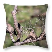 Mourning Dove - Board Of Directors Throw Pillow
