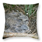 Mourning Dove Chicks Throw Pillow