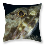 Mouth Of A Variegated Lizardfish, Papua Throw Pillow