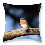 Mr. Bluebird Throw Pillow
