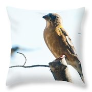 Mrs. Grosbeak Throw Pillow