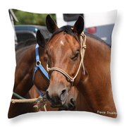 Mule Days Benson Throw Pillow