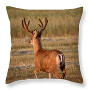 Mule Deer Buck In An Alberta Field Throw Pillow
