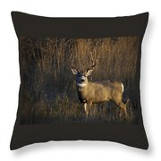 Mule Deer Buck Throw Pillow