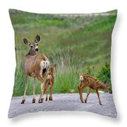 Mule Deer Doe And Twin Fawns Throw Pillow