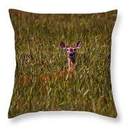 Mule Deer In Wheat Field, Saskatchewan Throw Pillow
