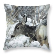 Mule Deer Odocoileus Hemionus In Snow Throw Pillow