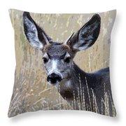 Mule Deer Spike Throw Pillow