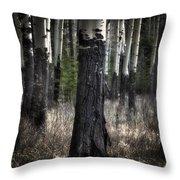 Muleshoe Trees Banff Throw Pillow