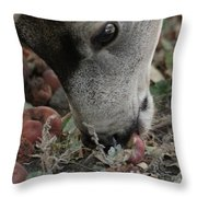 Mulie Buck 5 Throw Pillow