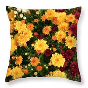 Multi Colored Mums Throw Pillow