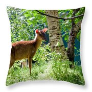 Muntjac Deer - Muntiacus Reevesi Throw Pillow