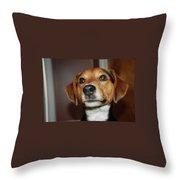 Murphy 8596 Throw Pillow