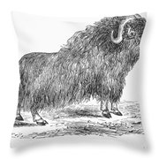 Musk Ox Throw Pillow