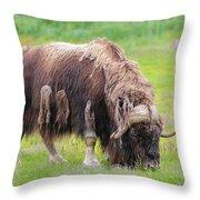Musk Ox Throw Pillow