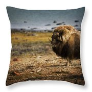 Muskox Ovibos Moschatusin The Northwest Throw Pillow