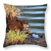 Muskrat Feeding Throw Pillow