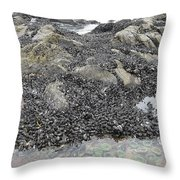 Mussels And Anemones  Throw Pillow