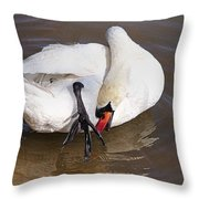 Mute Swan Grooming In Shallow Water 2 Throw Pillow