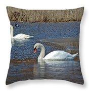 Mute Swans On A Cape Cod Pond - Cygnus Olor - Quissett  Massachusetts Throw Pillow