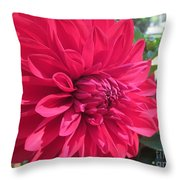 my favorite Dahlia Throw Pillow