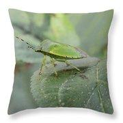 My Pretty Green Stink Bug Throw Pillow