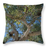 Naples Tree Throw Pillow