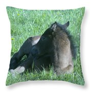 Napping Colt Throw Pillow