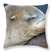 Napping Throw Pillow