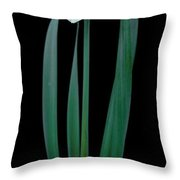 Narcissus Passionale Throw Pillow