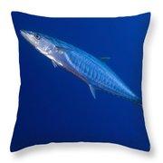 Narrow Barred Spanish Mackerel Throw Pillow