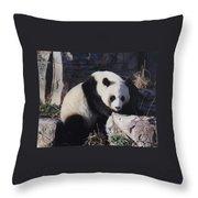 National Zoo Panda Throw Pillow