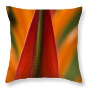 Natural Form Throw Pillow