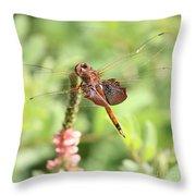 Nature Square - Saddleback Dragonfly Throw Pillow