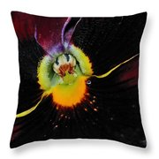 Nature's Amazing Colors - Pansy Throw Pillow