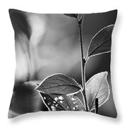 Natures Back Light Throw Pillow