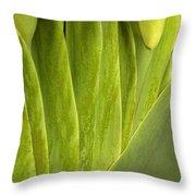 Nature's Still Life 2 Throw Pillow