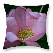 Nearly Spent Rose Throw Pillow
