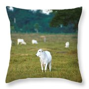 Nelore Beef Cattle Throw Pillow