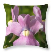 Nemesia Named Compact Pink Innocence Throw Pillow