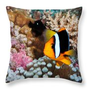 Turning Nemo Throw Pillow