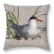 Nesting Common Tern Throw Pillow
