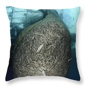 Net Full Of Ikan Puri, A Small Anchovy Throw Pillow