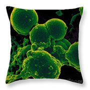 Neutrophil Ingesting Mrsa Bacteria, Sem Throw Pillow by Science Source