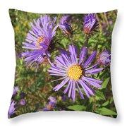 New England Aster Wildflower - Purple Throw Pillow