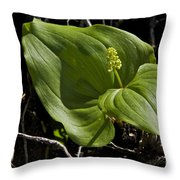 New Life From The Forest Floor Throw Pillow